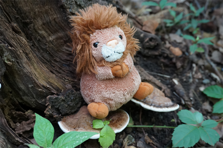 はじめまして!御朱印ライオン レオくんです