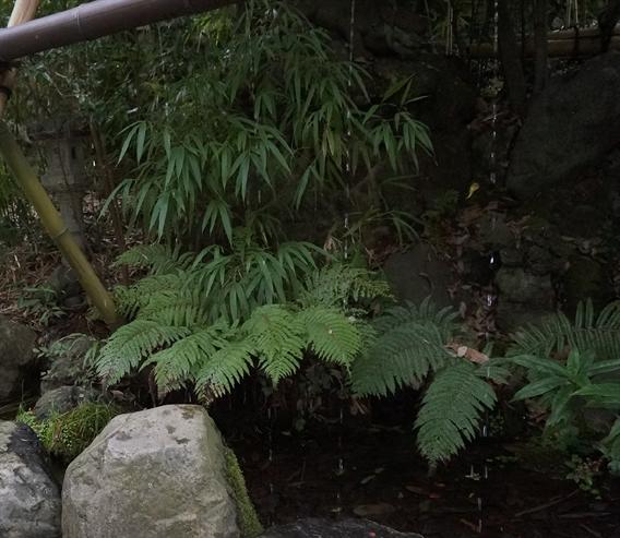⑪キツネさんの萌えキャラ絵馬?!白笹稲荷神社(神奈川県秦野市)